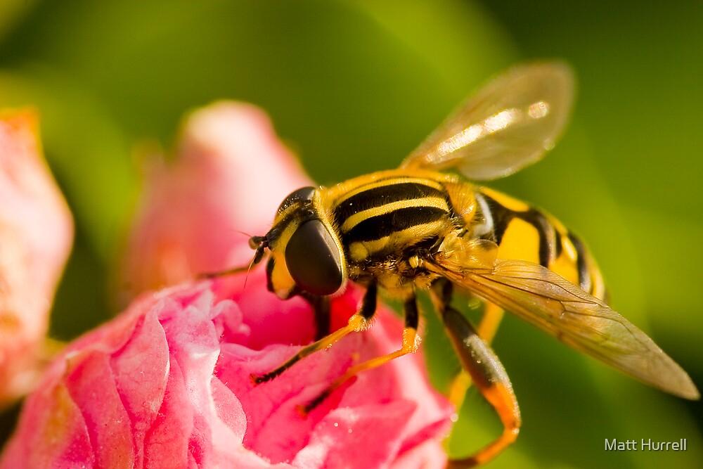 Just Bee-cos by Matt Hurrell