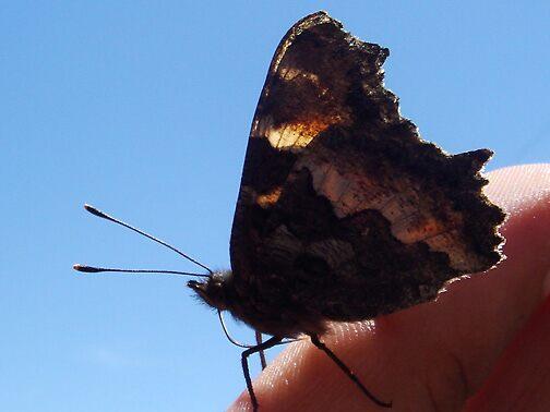 Butterfly 1 by Arlita Marie Moles