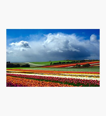 Paintbox Photographic Print
