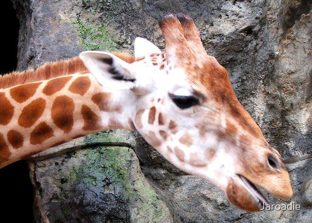 Mrs Giraffe by Jaroadie