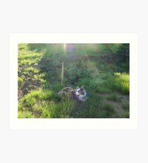 Australian Shepard Dog 1 Art Print