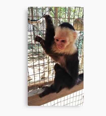 Cute Monkey Canvas Print