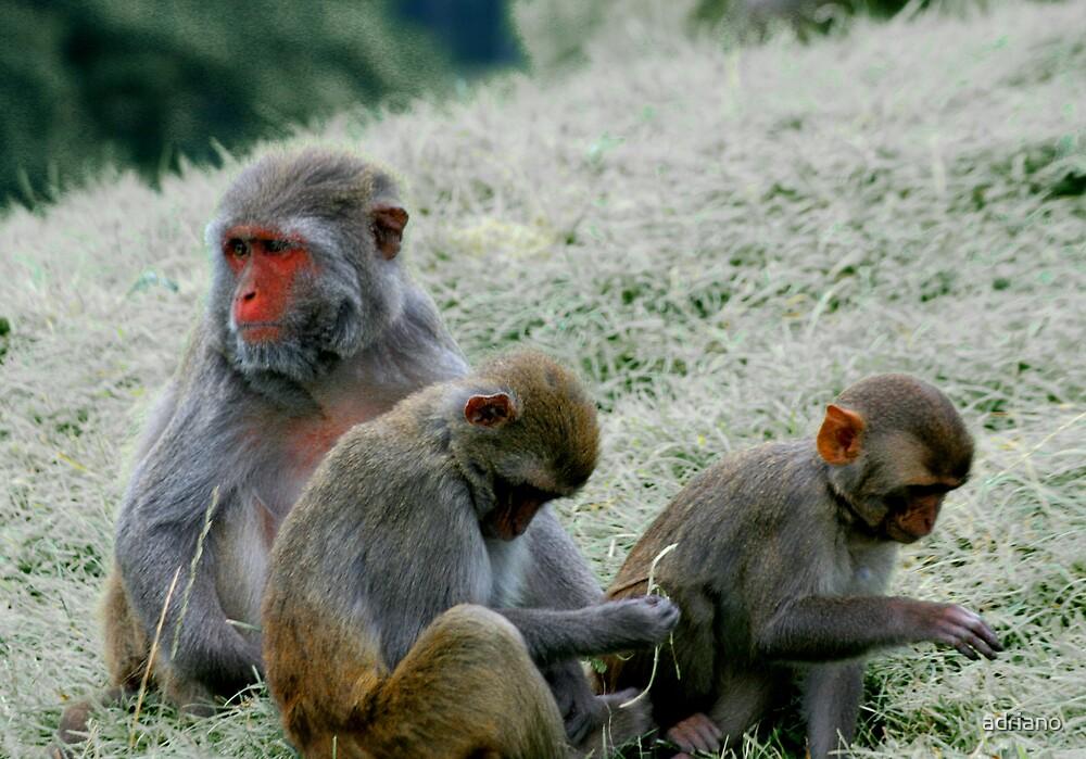 Icy monkeys by adriano