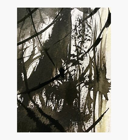 rain forest swamp....light seeping down Photographic Print