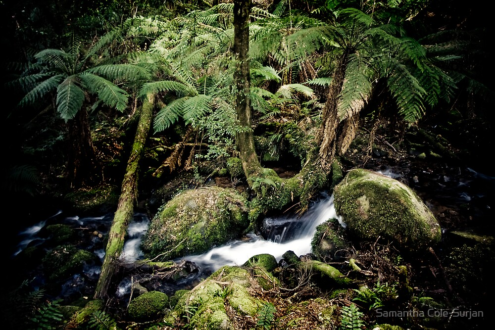 Cement Creek, Mt Donna Buang, Victoria by Samantha Cole-Surjan
