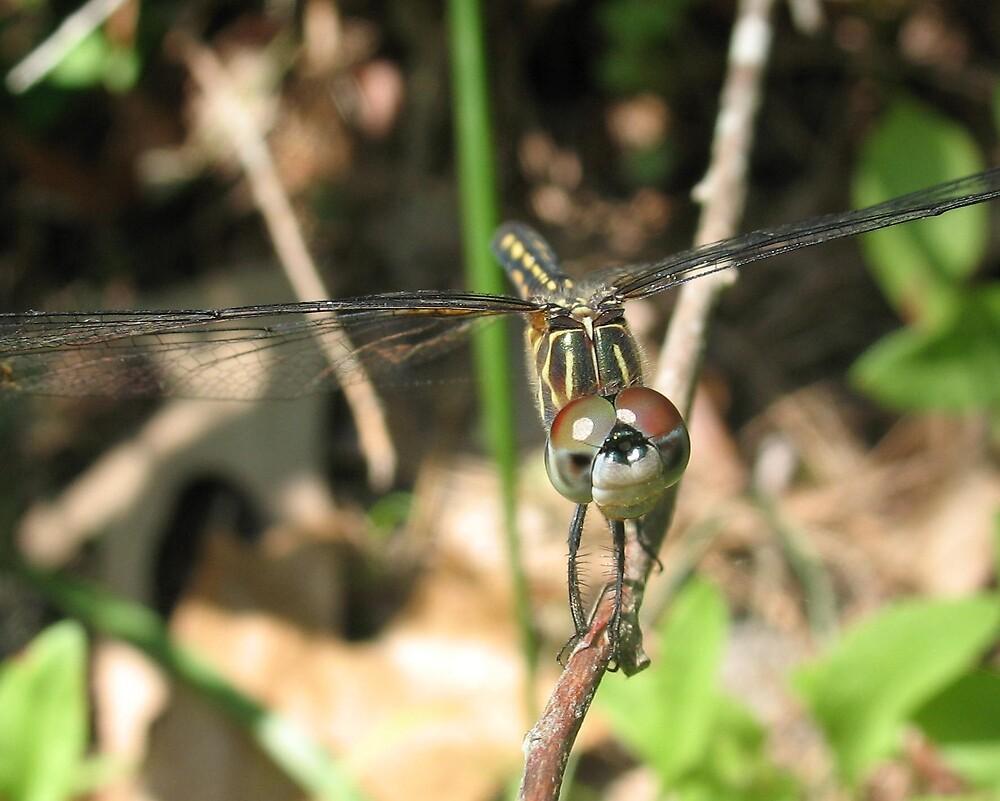 Dragonfly Smile by Chelsea Kerwath