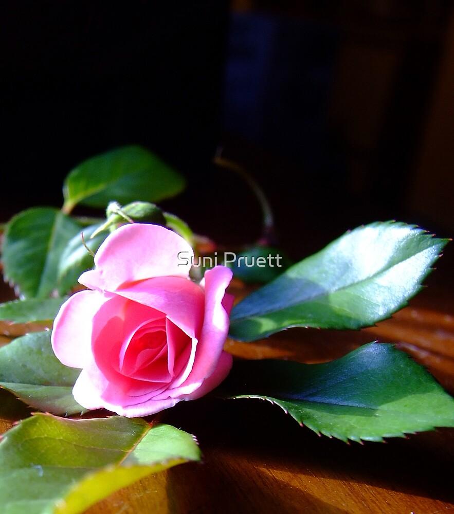 Preparing to Bloom by Suni Pruett