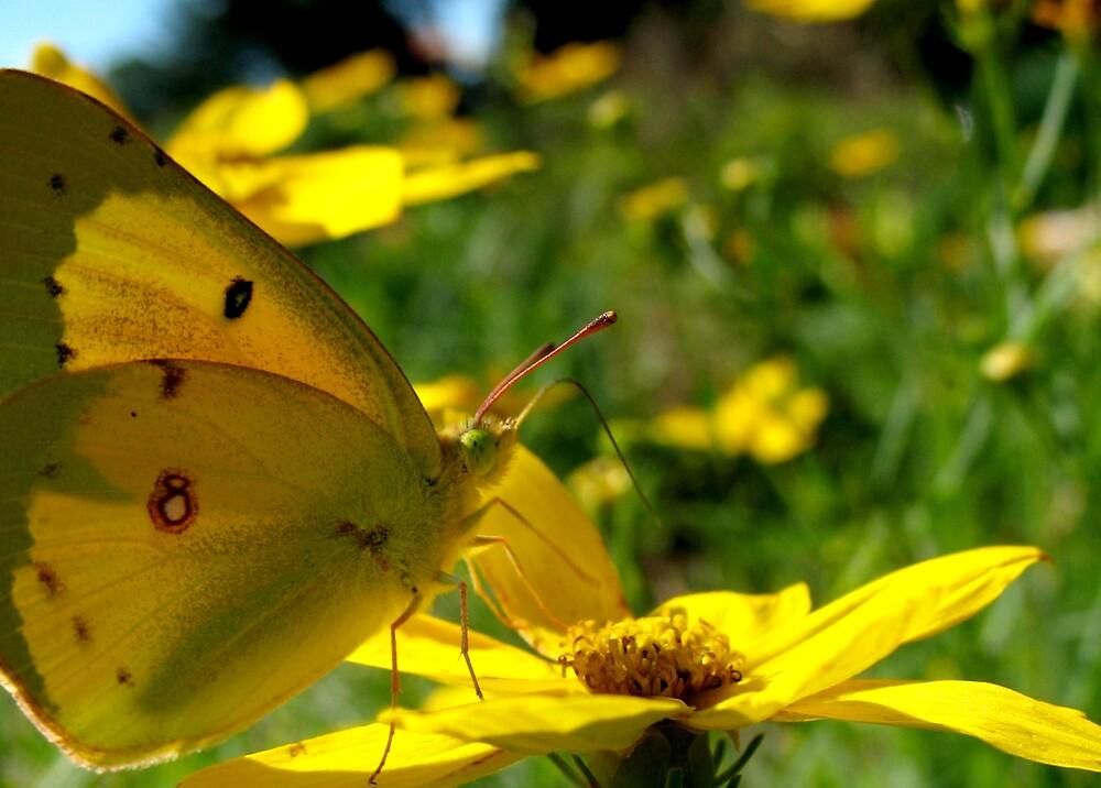 Yellow on Yellow by Chelsea Kerwath