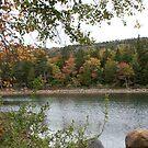 autumn colorsc by etccdb