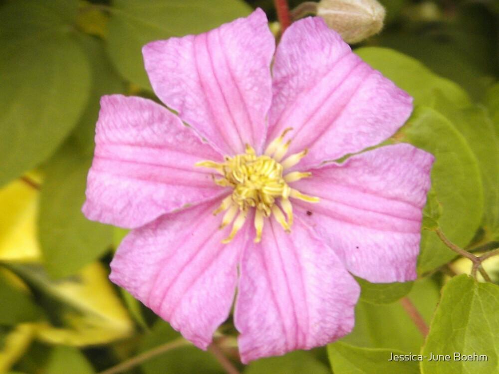 Little Purple Flower by Jessica-June Boehm