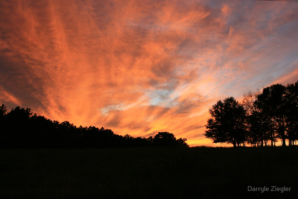 Trees Ablaze with the Sunset 2 by Darryle Ziegler