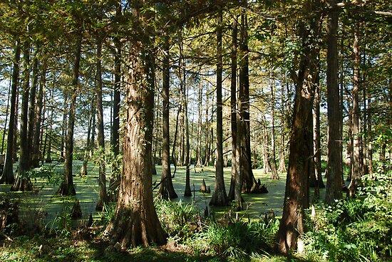 Cypress Lake by Bonnie T.  Barry