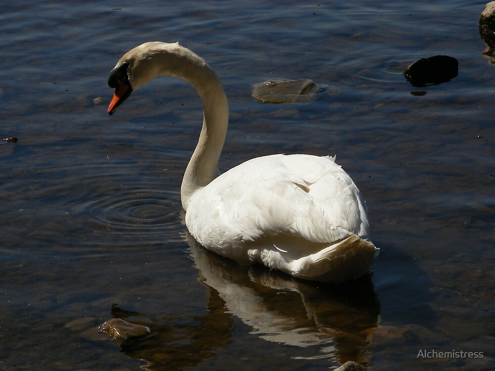 Swan by Alchemistress