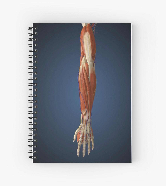 Cuadernos de espiral «Brazo humano con hueso, músculos y nervios ...