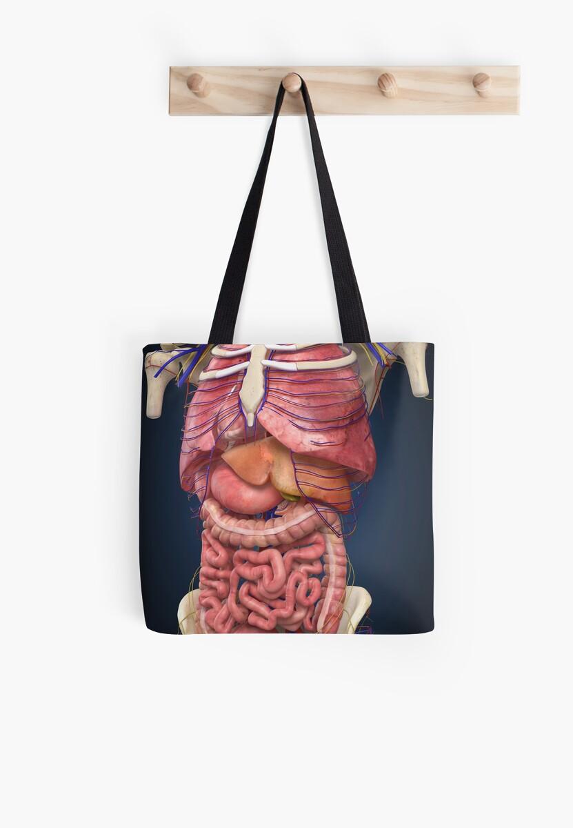 Bolsas de tela «Vista de la sección media que muestra los órganos ...