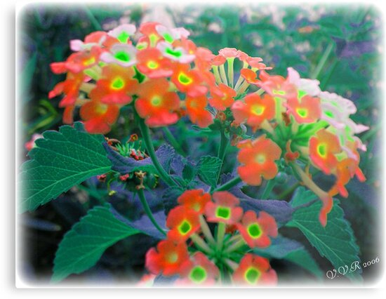 Glow by ladyvanessa