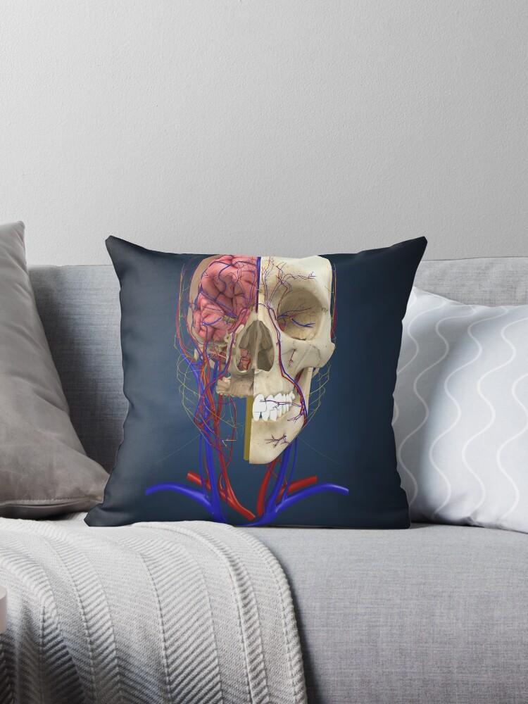 Cojines «Cráneo humano que muestra el cerebro y el sistema ...