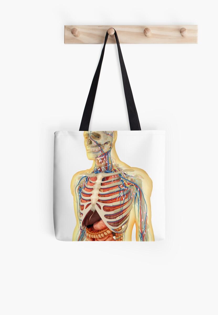 Bolsas de tela «Cuerpo humano con órganos internos, sistema nervioso ...