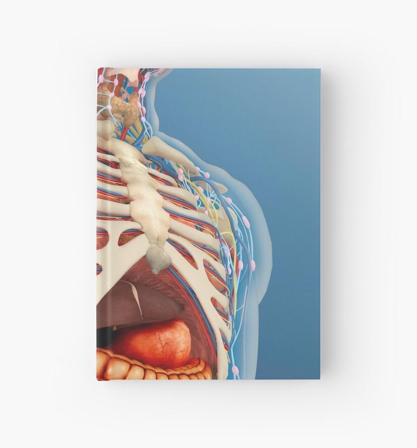 Cuadernos de tapa dura «Cuerpo humano con órganos internos, sistema ...