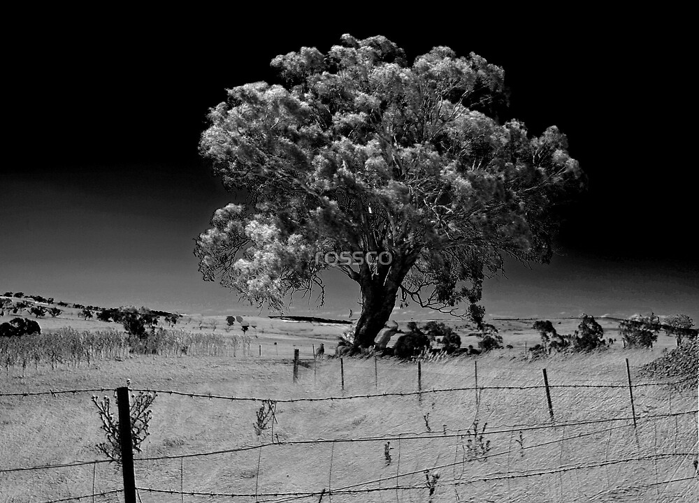 The Wishing Tree by rossco