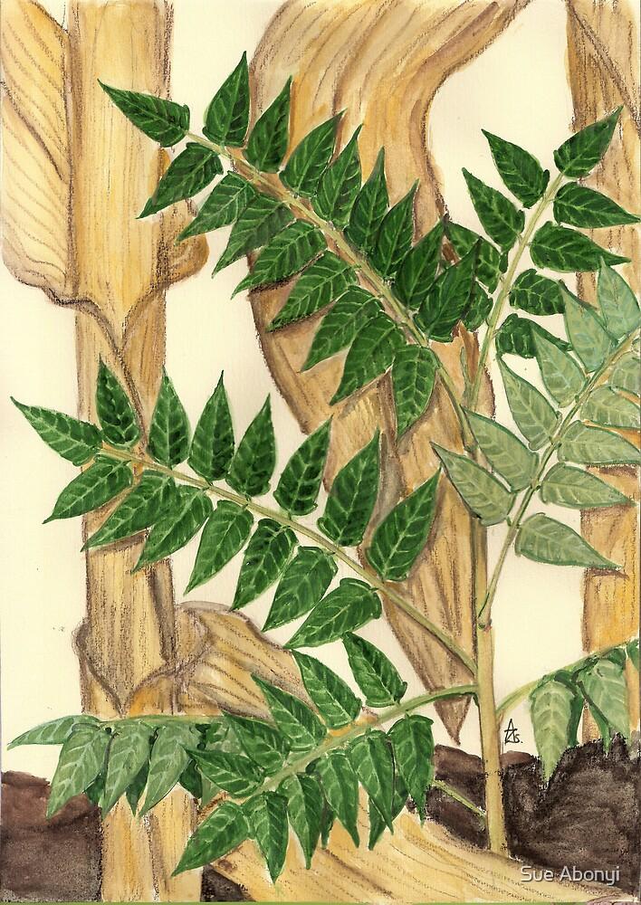 Ghetto Palm - Ailanthus altissima by Sue Abonyi