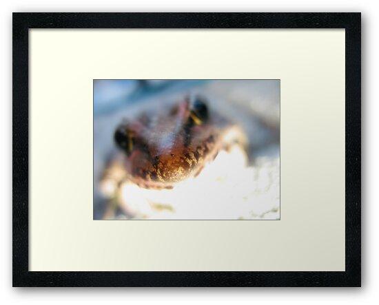 Frog Light by Chelsea Kerwath