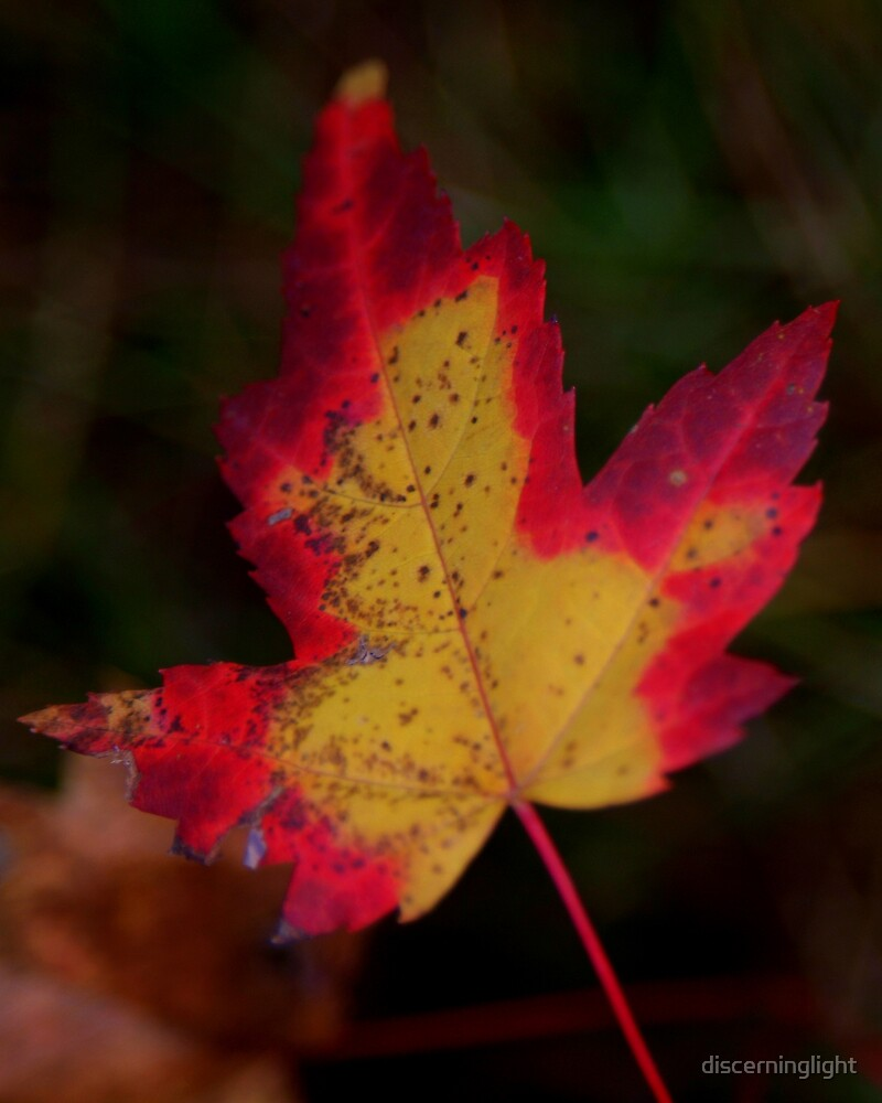 Flaming Leaf by discerninglight