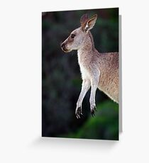 Kangaroo at Pebbly Beach Greeting Card