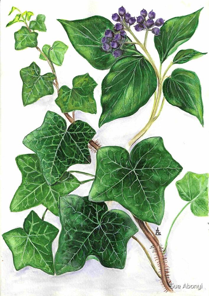 Ivy - Hedera helix by Sue Abonyi