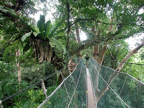 canopy by joancaroline