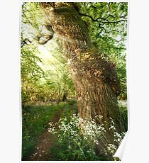 Beautiful path through spring woodland Poster