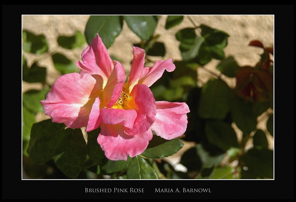 Brushed Pink Rose - Cool Stuff by Maria A. Barnowl
