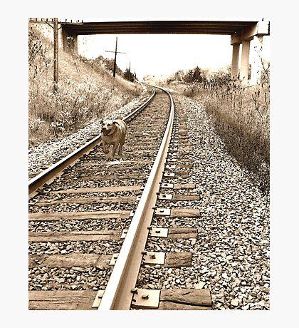 Racing the Train Photographic Print