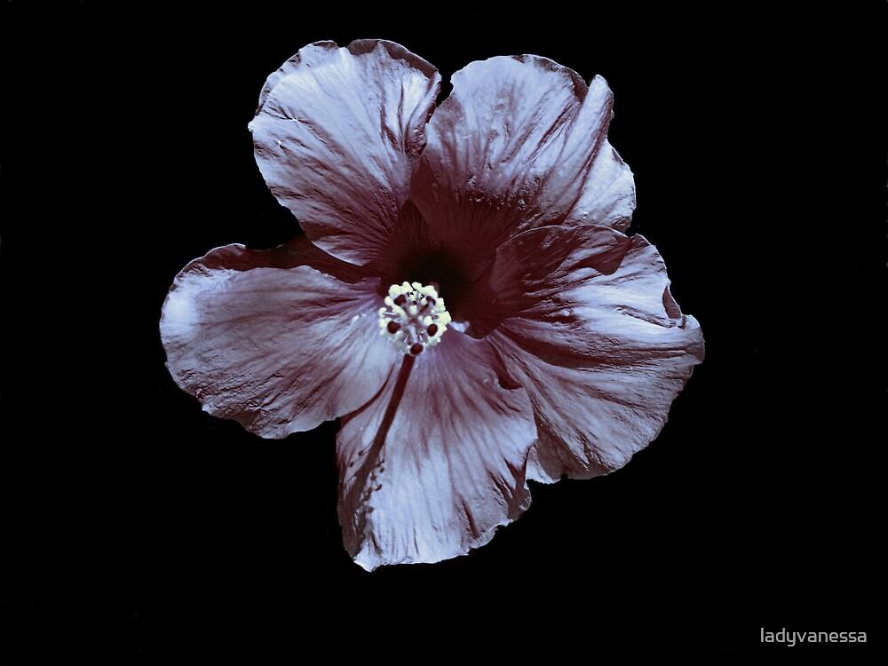 Monochrome Hibiscus by ladyvanessa
