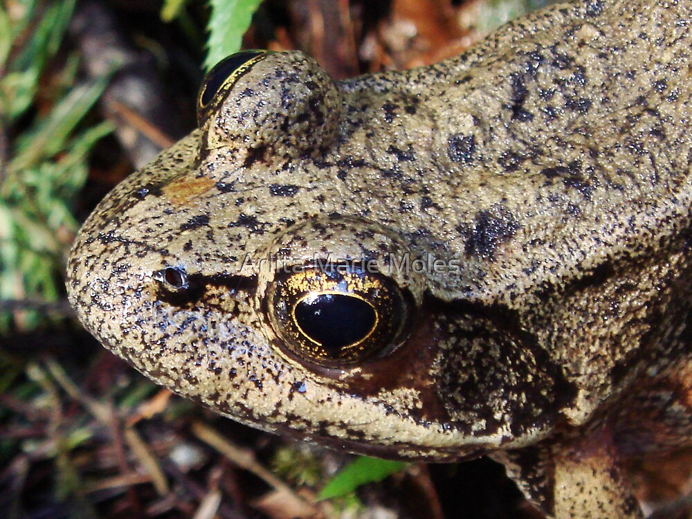 Frog by Arlita Marie Moles