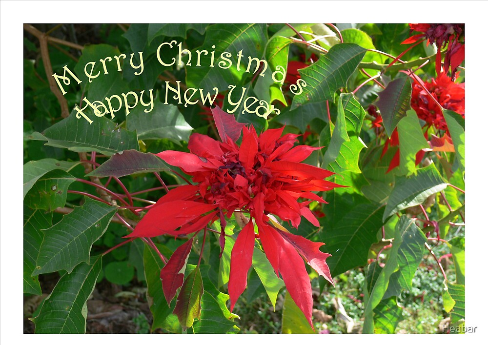 Merry Christmas with traditional Pointsettia !! by Heabar