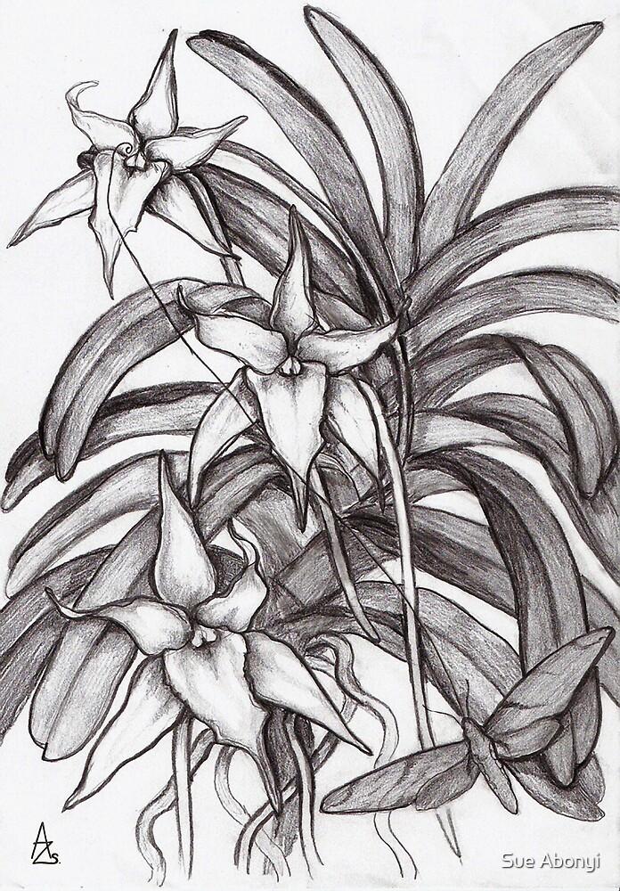 Angraecum Studies # 2 by Sue Abonyi