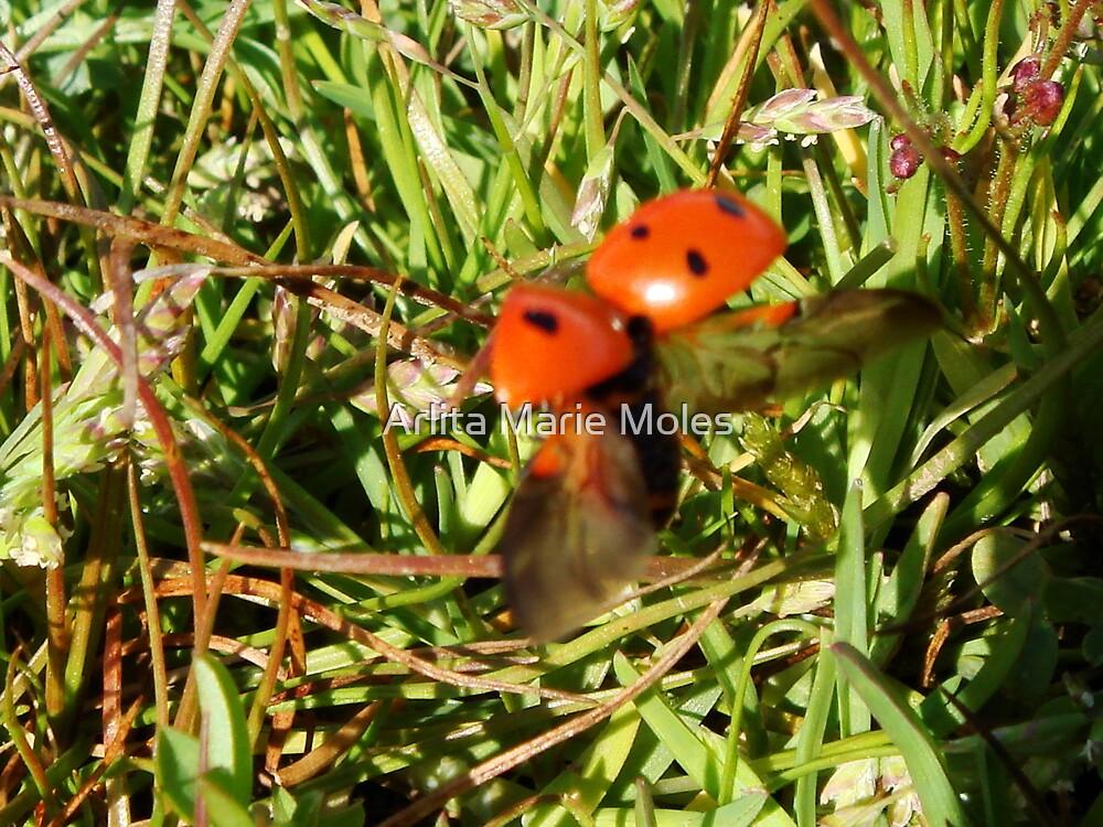 Lady Bug  by Arlita Marie Moles