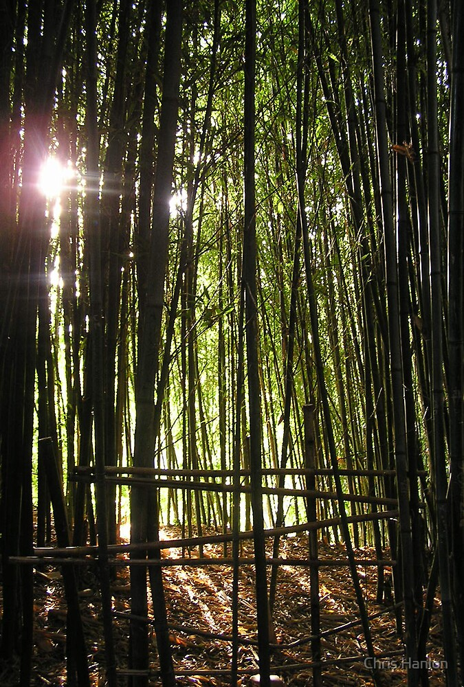 Emerald Bamboo Twilight by Chris Hanlon