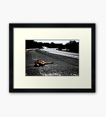 Road Kill. Framed Print