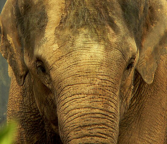 Elephant by Tom Newman