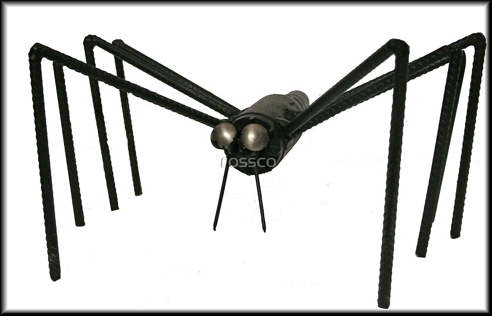""" The Spider "" by rossco"
