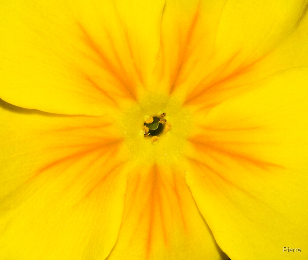 Yellow by Pierre