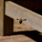 Bee inflight leaving my lens by TJ Baccari Photography