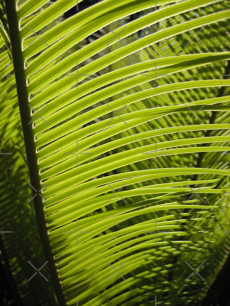 Cycad by liewy