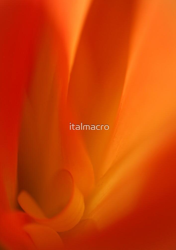 Secret Fire by italmacro