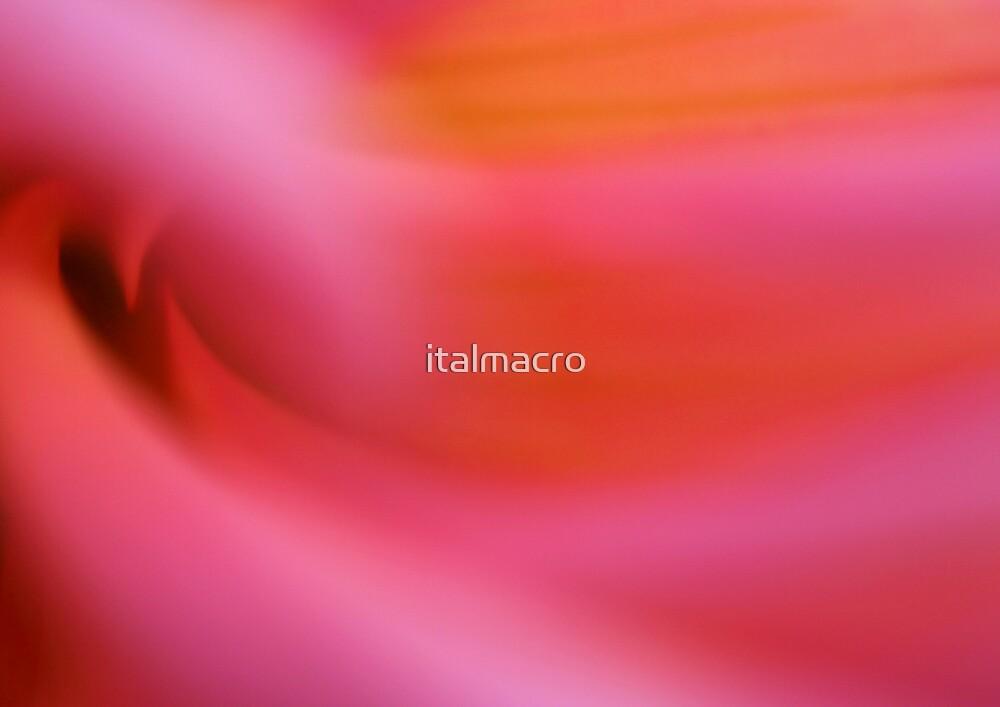 Surge by italmacro