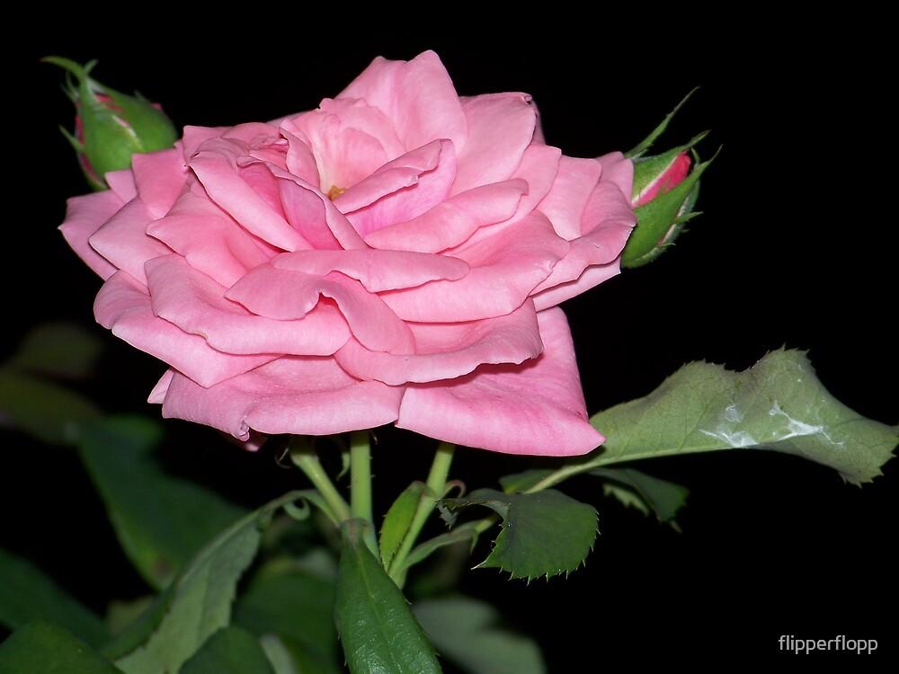 pretty pink by flipperflopp