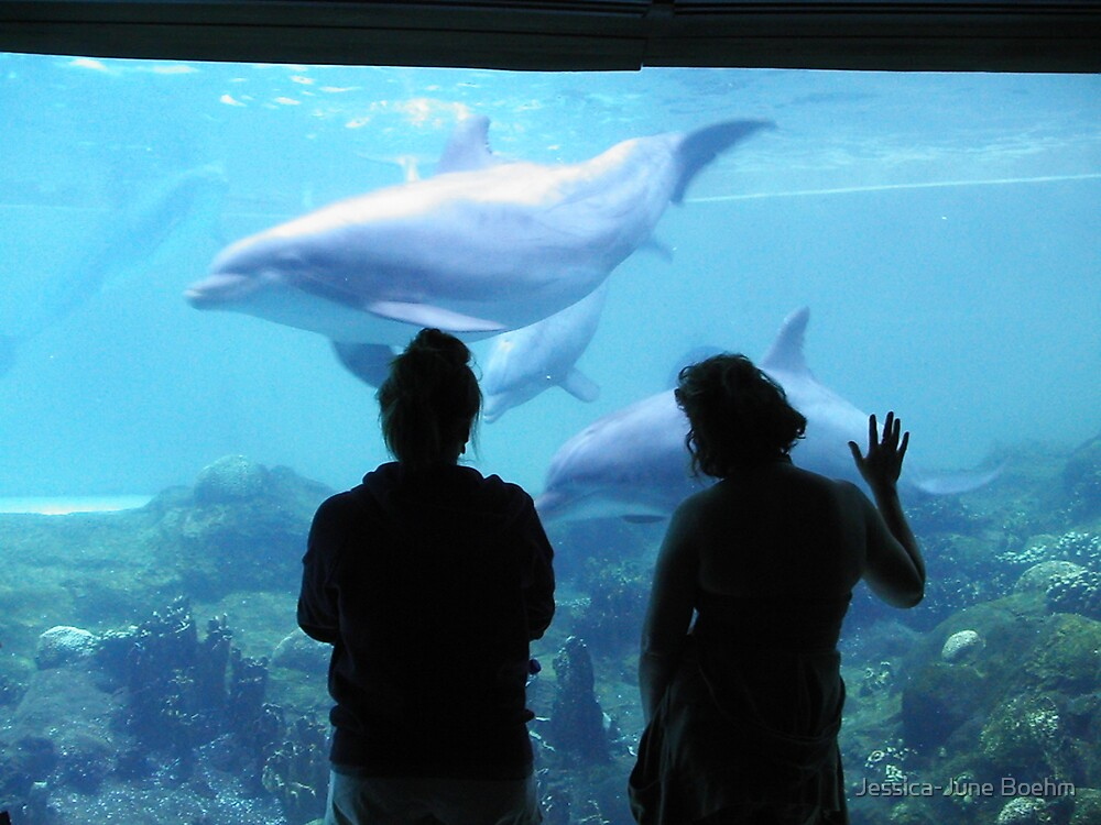 Dolphin Admiration by Jessica-June Boehm