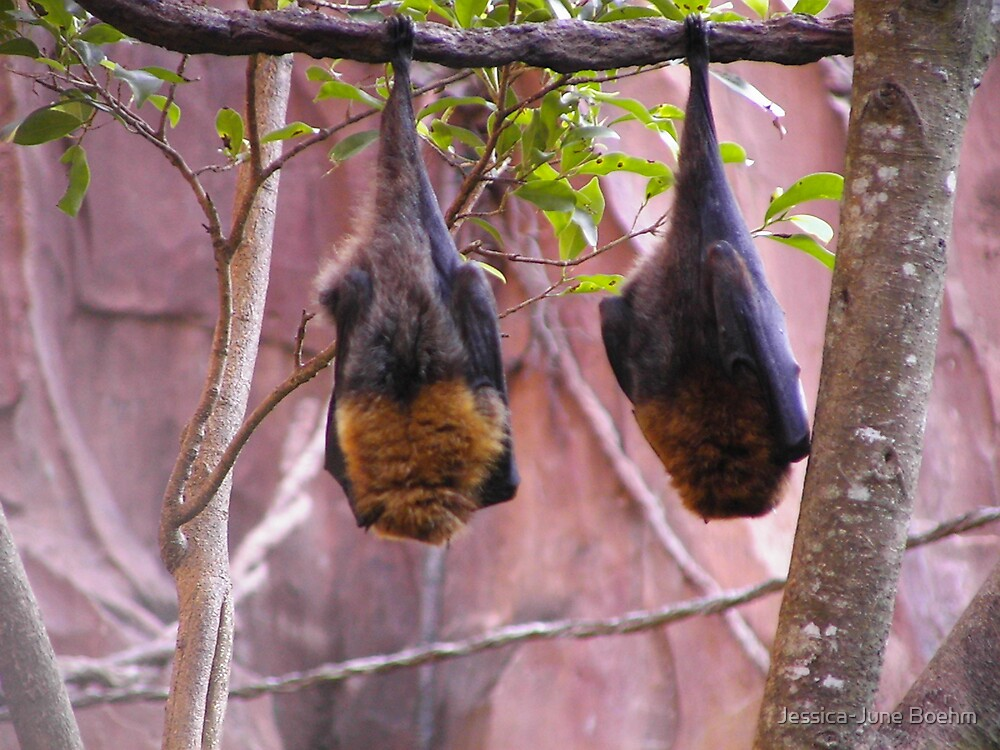 Hanging Around by Jessica-June Boehm